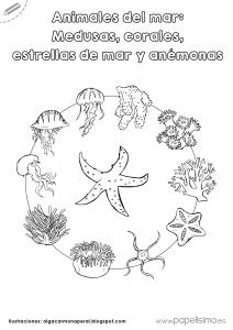 Animales del mar Medusas corales estrellas de mar y anemonas