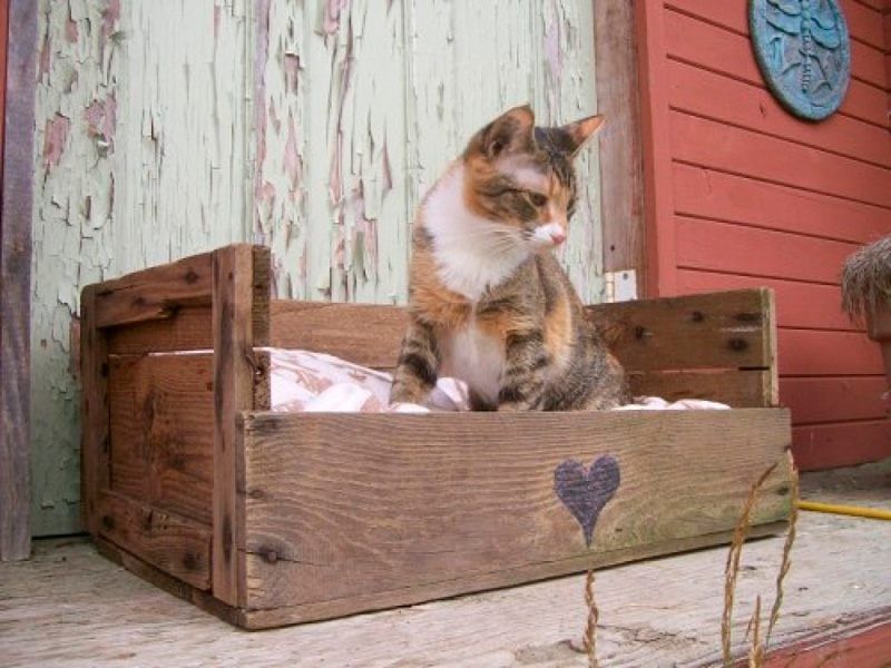 Cama-para-gato-con-caja-de-fruta-de-madera